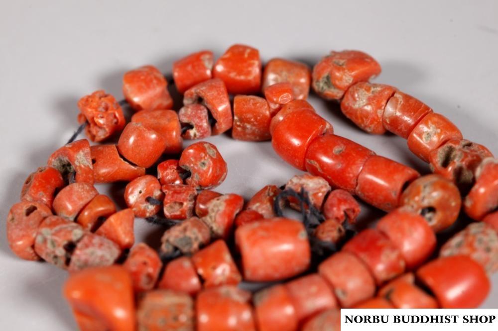 San hô đỏ hóa thạch Tây Tạng - Nepal - Himalaya đá quý đắt hơn Vàng 1