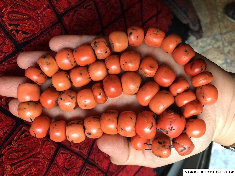 San hô đỏ hóa thạch Tây Tạng - Nepal - Himalaya đá quý đắt hơn Vàng 7