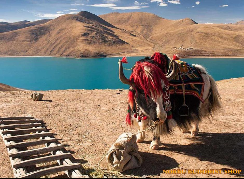 Du lịch Tây Tạng: Những điều cần lưu ý để tận hưởng chuyến đi trọn vẹn nhất